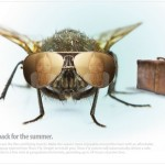Shoo-Fly Insecticide Print