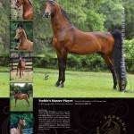 Treble's Morgan Manor Print Ad
